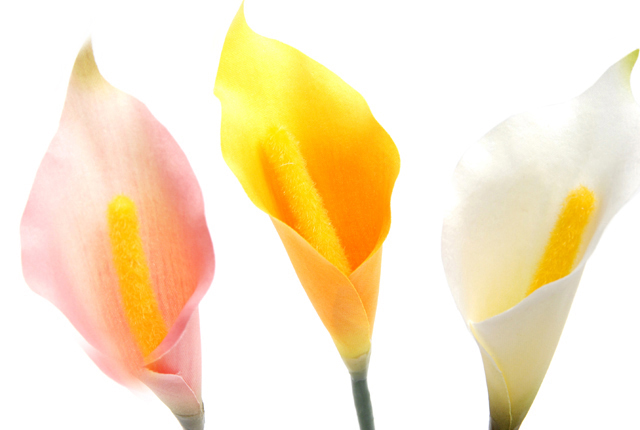 bonboog ボタニカルペン 「カラー」