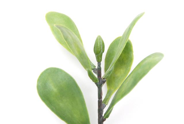 Botanical pen(ボタニカルペン) ロウクァリーフ