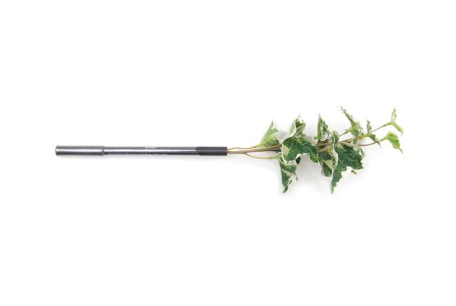Botanical pen(ボタニカルペン) アイビー